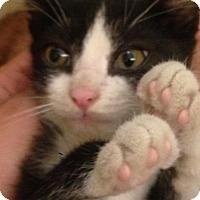 Adopt A Pet :: BING BONG - Clayton, NJ