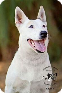 Cattle Dog Mix Dog for adoption in Scottsdale, Arizona - Drama