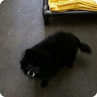 Adopt A Pet :: Terry - Chippewa Falls, WI