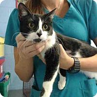 Adopt A Pet :: A497779 - San Bernardino, CA