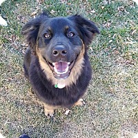 Adopt A Pet :: Hobbs - Duchess, AB