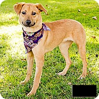 Adopt A Pet :: Charly - Courtesy Post - Encino, CA
