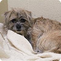 Adopt A Pet :: Gizzie - Elyria, OH