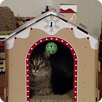 Adopt A Pet :: Cambridge (bonded with Frederick) - Alexandria, VA