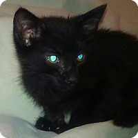 Adopt A Pet :: EBONY - Brea, CA