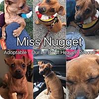 Adopt A Pet :: Nugget - Poland, IN