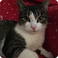 Adopt A Pet :: Fiona - Wayne, NJ