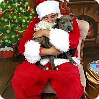 Adopt A Pet :: Slater - Newcastle, OK
