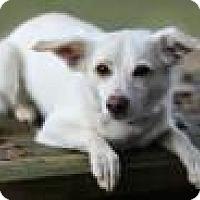 Adopt A Pet :: CORA - Tomball, TX