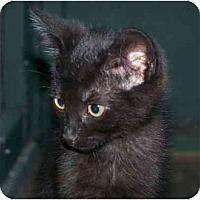 Adopt A Pet :: Alina - Davis, CA