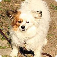 Adopt A Pet :: Kiwi - Toronto, ON
