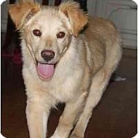 Adopt A Pet :: Gabe - Staunton, VA