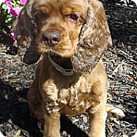 Adopt A Pet :: Katy - Sugarland, TX