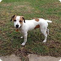 Adopt A Pet :: Jelly Bean in Beaumont - Houston, TX