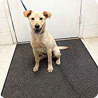 Adopt A Pet :: Jasper - Lancaster, VA
