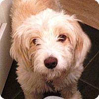 Adopt A Pet :: Stella - Vista, CA