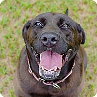 Adopt A Pet :: Ella - Conyers, GA