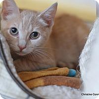 Adopt A Pet :: Ripley - Island Park, NY