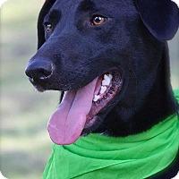 Adopt A Pet :: Junebug - Wilmington, DE