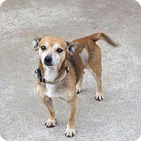 Adopt A Pet :: Mozart - Albany, NY