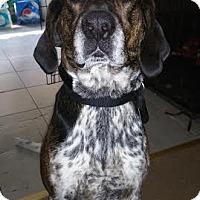 Adopt A Pet :: Mason - Acushnet, MA