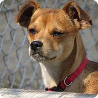 Adopt A Pet :: Marigold - Meridian, ID