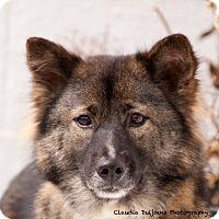Adopt A Pet :: Mali - Long Beach, NY