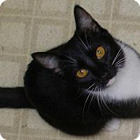 Adopt A Pet :: Jet - Encinitas, CA