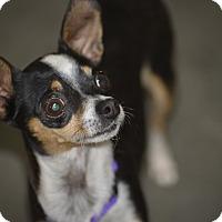 Adopt A Pet :: Carlotta - Meridian, ID