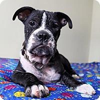 Adopt A Pet :: Angus - Mission Viejo, CA