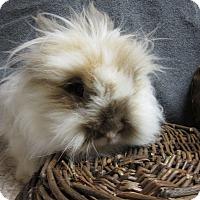 Adopt A Pet :: Katerina - Newport, DE