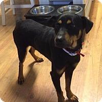 Adopt A Pet :: Wazo - Clayton, NC