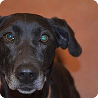 Adopt A Pet :: Gemma - ROME, NY