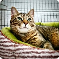 Adopt A Pet :: Butterball - Parma, OH