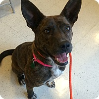 Adopt A Pet :: Kendra in CT - Manchester, CT