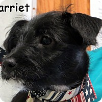 Adopt A Pet :: Harriet - Warren, PA