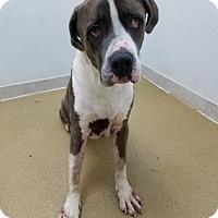 Adopt A Pet :: Hercules - Miami, FL