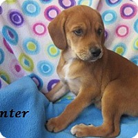 Adopt A Pet :: Hunter - Bartonsville, PA