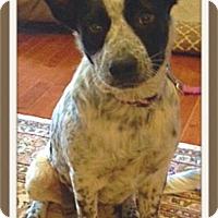 Adopt A Pet :: Oreo - Huntsville, AL