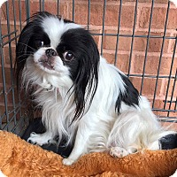 Adopt A Pet :: Marilyn - Atlanta, GA