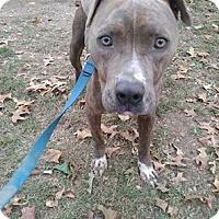 Adopt A Pet :: Dodger - Covington, TN