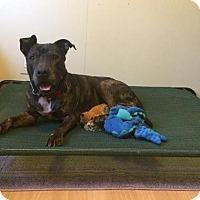 Adopt A Pet :: Trina E7B - Loxahatchee, FL