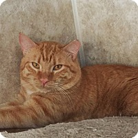 Adopt A Pet :: Ector - Colorado Springs, CO