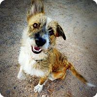 Adopt A Pet :: Ragtime Jimmy - Casa Grande, AZ