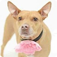 Adopt A Pet :: Tonka - New Smyrna Beach, FL
