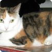 Adopt A Pet :: Tara - Powell, OH
