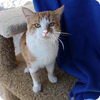 Adopt A Pet :: Berry - Yucaipa, CA