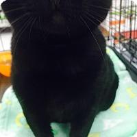 Adopt A Pet :: Vitra - Los Angeles, CA