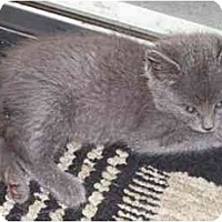 Adopt A Pet :: Kobe - Davis, CA