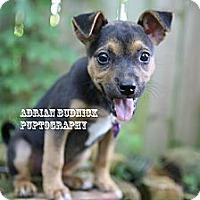 Adopt A Pet :: Mabel - Nashville, TN